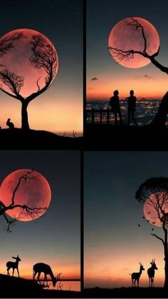Canon Photography, Wildlife Photography, Amazing Photography, Photography Photos, Lifestyle Photography, Film Le Secret, Strawberry Moons, Wallpaper Keren, Photo D Art