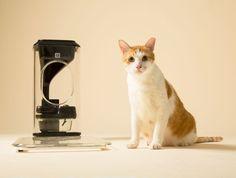 Um bistrô para o seu gato  -  High-Tech Girl    Bistro, um equipamento para alimentar gatos e monitorizar a sua saúde