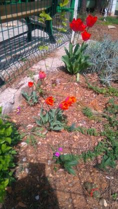 #lale #nature #flower #tulip