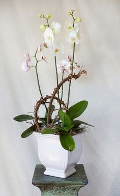 HEPATICA everyday arrangement (phalaenopsis orchid plant with grape vine) – photo: QUARTER design studio