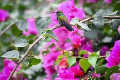 Beautiful hummingbird in the bush with flowers Stock Images