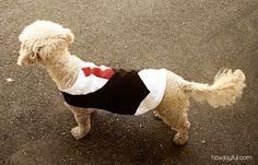 Pet Vest for Curly | How Joyful