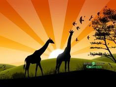 Go Green Safari of Show your support with this great wallpaper! Giraffes, Go Green, Safari, Wallpapers, Pretty, Movie Posters, Movies, Art, Art Background