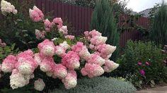 Pokud jste vnímaví a nežijete pouze shonem, pak je na jaře téměř nemožné, bez povšimnutí, projít kolem nádherných rostlin, květin a keřů, které Vás odzbrojí svou krásou a vůní. A vůbec nejlepší je, když takováto nádhera, roste přímo na Vaší zahradě. Okrasné keře Vaši zahradu působivě ozdobí. Vybrat však tu, …