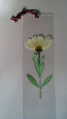 Pressed White Cosmos Flower Bookmark by FlowerFelicity on Etsy, $4.99