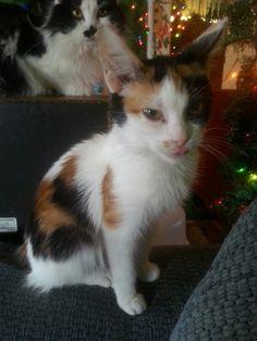 My kitten Missy