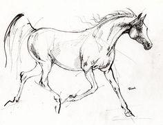 Line drawings hoeses | http://images.fineartamerica.com/ima...tarantella.jpg