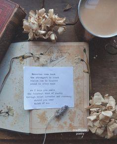 'Dried Lavender and Rosemary' by Rachel Stevenson Flower Poetry, Dried Flowers, Tea Cups, Lavender, Flower Preservation, Dry Flowers, Cup Of Tea