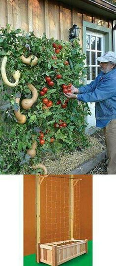 How to Build a Vertical Vegetable Garden Above In The Photo Is Another Great Ideal For A Vertical Garden. Also, marigolds keep tomato pests away Veg Garden, Edible Garden, Vegetable Gardening, Garden Trellis, Verticle Vegetable Garden, Gourd Vegetable, Tomato Trellis, Vegetables Garden, Garden Fences