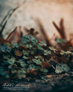 Macro (Ashton Heinrich / Bryan / United States) #Canon EOS REBEL T5 #macro #photo #insect #nature