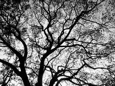 L'arbre est à la source de l'inspiration de la collection Arborescence. The tree is the source of inspiration of the Tree collection.