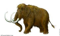 Mammoth - Pascale Galibert