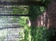 Trestle Bypass Trail, north Shawnigan Lake, Koksilah River Provincial Park.