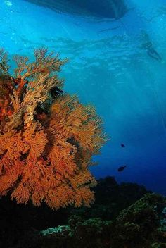 Go diving on your long weekend. Images of Diving Byron Bay and the Julian Rocks - Sundive Byron Bay Australia.
