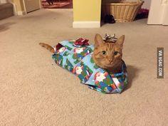 Merry Christmas! Poor cat lol!!