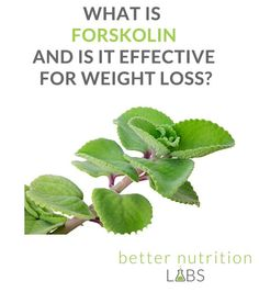 Best greens for fat loss