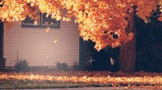 The sound of leaves rustling across a pavement, the taste of hot apple cider, the auburn glow of the evening light...