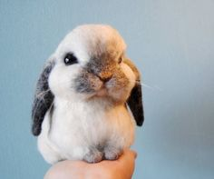 Custom Made Rabbit, Needle Felted Rabbit, Handmade Lifelike Felt Rabbit: Seal Point Dwarf Lop, Holland Lop, French Lop or any other breed Cute Baby Bunnies, Felt Bunny, Cute Babies, Needle Felted Animals, Felt Animals, Animals And Pets, Cute Little Animals, Cute Funny Animals, Cute Cats