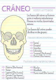 Medicine Notes, Medicine Student, Med Student, Student Studying, Studying Medicine, Science Notes, Medical Anatomy, Bullet Journal School, Nursing Notes