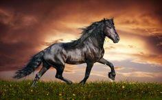 Dark Brown Horse High Definition #Wallpaper