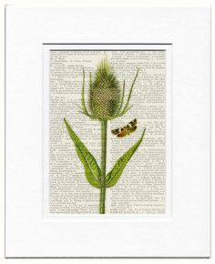 thistle dictionary page print