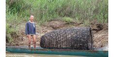 Fish-Trap-in-Sarawak