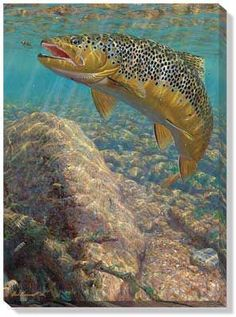 Brown Trout Wrapped Canvas by M. Susinno:
