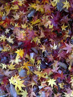 Autum Leaves in the Garden