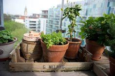 Balcony planting / Urban Jungle Bloggers - Photograph by katharinepeachey.co.uk | Apartment Apothecary