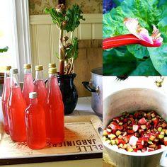 Rabarbersaft - godare än jättegod! Det här är en tid jag ser fram emot varje år: när jag kan göra den goda kallrörda rabarbersaften. Superenkelt supergott och troligen ganska nyttigt!  Under artiklar på hemsidan hittar du receptet.  #rabarber #rabarbersaft #recept #rabarberrecept #egenskörd #skörd #odlingslycka #härodlat #hemodlat #rhubarb #minträdgård #odling #frö #lantliv #allakanodla #egnarecept #wexthuset #egenodlat #trädgård #garden #drivhus #växthus #greenhouse