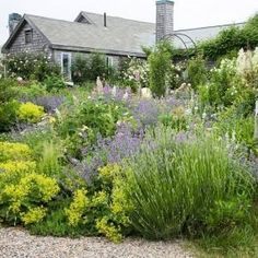 Cheery Repose – A collection of water-hardy plants, including lavender, catmint, goat's beard, and lady's mantle, all require minimal water to reach maximum growth.