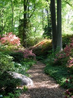 Through the wooded path....incredible garden path..........