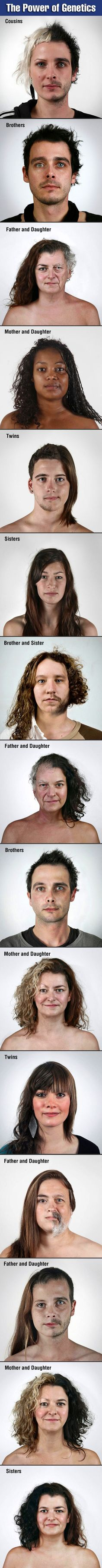 The power of genetics are shown in these awesome pictures. Decir No, Strong Family, Brandon Flowers, Joe Armstrong, Funny Images, Funny Photos, Trippy, Family Images, Mind Blown