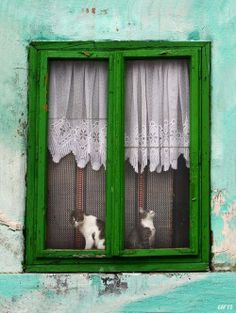 ♥ Cats in  ^..^ the window ❤