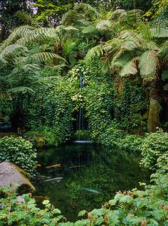 Water in English Gardens (21 of 33) |Trebah Gardens, Cornwall, England