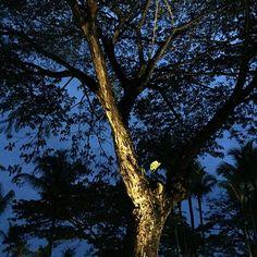 Markspotlight_Luna_LED Spotlights, The Outsiders, Led, Lightning, Plants, Lightning Storms, Plant, Lighting, Planets