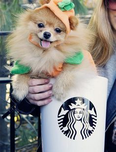 20 Ways to Dress Up Your Dog This Halloween | So cute, it's scary!