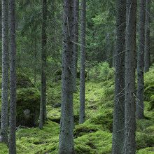 Canvastavla - Woodland Path