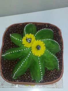 Kaktus-letecky