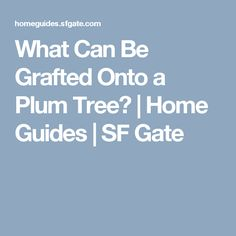 What Can Be Grafted Onto a Plum Tree?   Home Guides   SF Gate