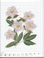 """Gallery.ru / Mosca - Альбом """"Herbier"""""""
