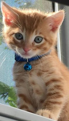What You Should Know About Sick Cat Symptoms? Cute Little Kittens, Cute Little Animals, Kittens Cutest, Pretty Cats, Beautiful Cats, Kittens And Puppies, Cute Puppies, Sick Cat, Orange Tabby Cats