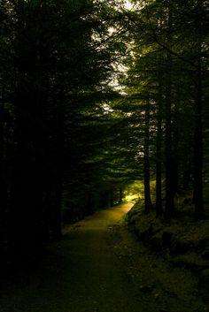 Crone Woods, Wicklow, Ireland.