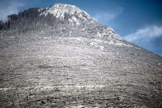 Blowdown of trees from the May 18, 1980, eruption of Mount St. Helens, viewed on <span>August 22, 1980</span>.