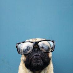 little dog, big glasses