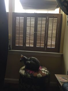 Coco, the Couture Cat: Monday Mewsings Brew Pub, Pet Fashion, Cat Walk, Couture, Cats, Walkway, Gatos, Haute Couture, Cat