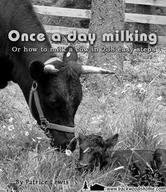 """Once a Day Milking, by Patrice Lewis. """"It sounds bucolic, doesn't it? The simple joys of milking your own cow. Fresh milk, fresh cream, homemade cheese, butter, yogurt. What can get better than that? But when face-to-face with a 1200-pound horned bovine behemoth, this enthusiasm might wane."""""""