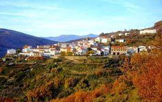 ENTRE SETAS (Barrado) 15 de noviembre (Sábado) en Barrado Nueva actividad, nueva jornada dirigida a l@s amantes de la recolección y el conocimiento de las setas de la comarca para este otoño.