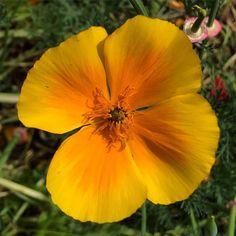 https://flic.kr/p/vn9XCe | So pretty - so much beauty under our feet! #upsticksandgo #flowers #yellow #unitedkingdom #naturephoto #travelgram #michfrost #exploring #lookingaround #beautyeverywhere