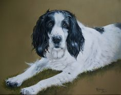 'Biz'. English springer spaniel by Tania Robinson. Acrylic on canvas. Private commission 2013.